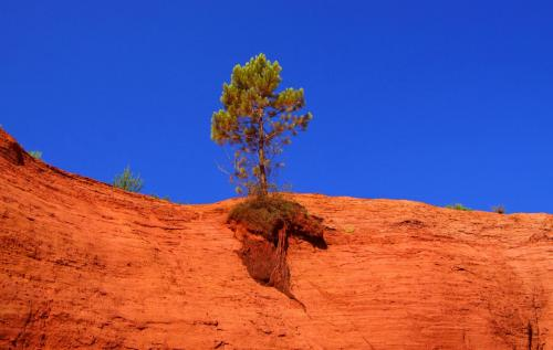 Ocres-de-Rustrel-arbre-sur-falaise